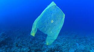 Plastikowa torebka w oceanie nie tylko szkodzi?