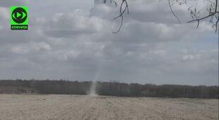 Diabełek pyłowy w gminie Piaseczno